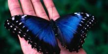 доклад о бабочках 2 класс окружающий мир