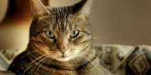 доклад про кошек 2 класс окружающий мир