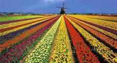 нидерланды доклад 3 класс окружающий мир