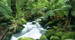 Тропические растения 2 класс доклад