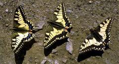 Все о бабочках (для детей 2 класса по окружающему миру)