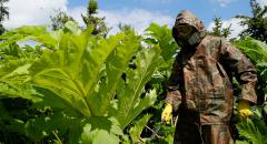 Борщевик - ядовитое растение (доклад, 3 класс)