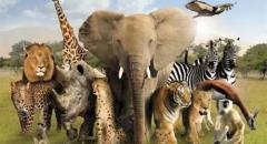 животные африки доклад 2 класс окружающий мир