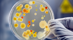 Доклад про бактерии (3 класс, окружающий мир)
