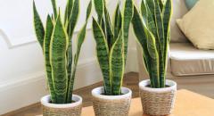 Комнатные растения. Доклад для 2 класса по окружающему миру