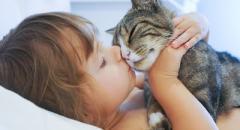 Рассказ про кошку (1 класс, окружающий мир)