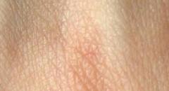 Значение кожи для организма (4 класс, доклад)