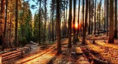 Жизнь леса (доклад, 4 класс)