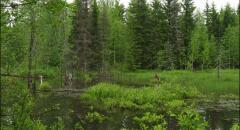 Жизнь леса (4 класс, окружающий мир)