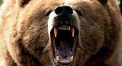Научный доклад о медведях для 5 класса
