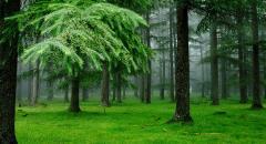 Реферат о хвойных растениях (3 класс)