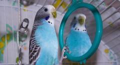 Доклад о попугаях (2 класс)