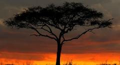 Заповедники Африки (доклад, 7 класс)