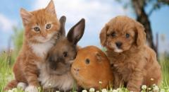 Доклад о домашних животных для детей