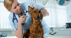 профессия ветеринар для детей