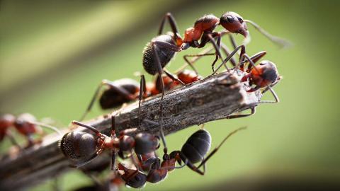 Доклад о муравьях (3 класс)