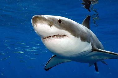 Реферат об акулах скачать как написать отчет по практике медведь