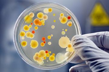 Бактерия доклад для детей 3144