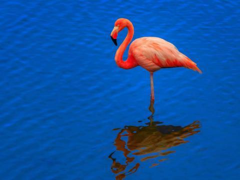 Розовый фламинго. Красная книга. Краткое описание (10 предложений)