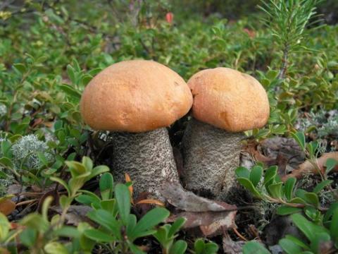 доклад про грибы 2 класс окружающий мир