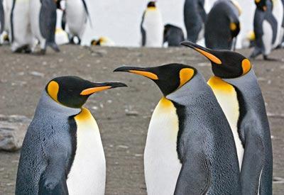 Короткий рассказ про пингвинов для 1 класса