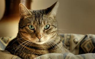 Доклад о домашних кошках 3516