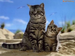 Животные и их детеныши (доклад, 3 класс)