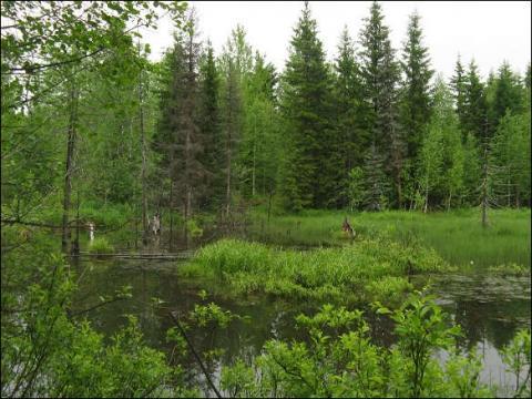 Жизнь леса класс окружающий мир ДоклаДики Жизнь леса 4 класс окружающий мир