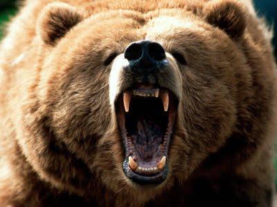 Научный доклад про бурого медведя 3746