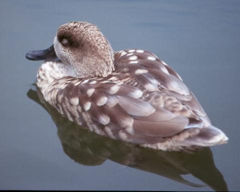 Редкие виды птиц обитающие на озерах доклад ДоклаДики С каждым годом человек отдаляется от природы все сильнее Сегодняшние горожане склонны не замечать даже те островки зелени которые принято оборудовать в
