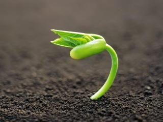 Если бы на Земле не было растений (3 класс)