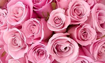 Роза красивый цветок описание