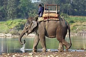 Индийский слон (доклад для 1 класса)