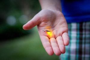 жуки-светляки описание для детей