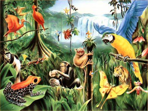 тропические животные доклад 2 класс
