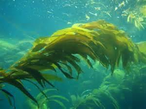 Растения морей и океанов (3 класс)